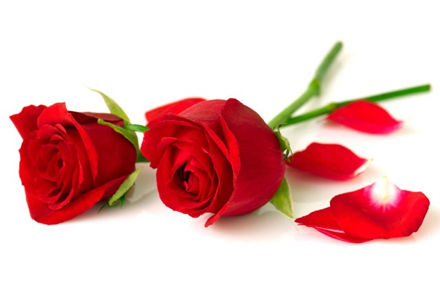 Image result for Valentines Roses