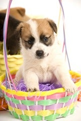 Puppy-Easter-Basket_thumb